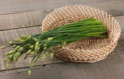 Garlic Chives Stock Photos