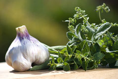 Garlic with choice of garden herbs Royalty Free Stock Photography
