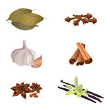 Garlic , cinnamon sticks, dried cloves, bay leaves, anise star, vanilla Stock Image