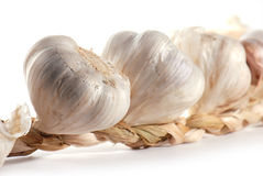 Garlic in close-up Stock Image