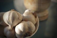 Garlic, nature`s miracle medicine stock photo