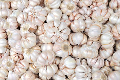 Garlic closeup Royalty Free Stock Photo