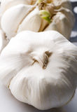 Garlic - closeup Stock Photos