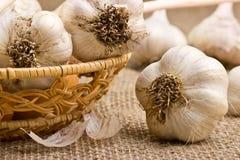 Garlic closeup Stock Photography