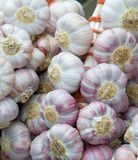 Garlic clove Royalty Free Stock Images