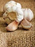 Garlic clove Royalty Free Stock Photos