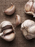 Garlic clove and garlic bulb Stock Photography