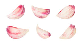 Garlic clove. Isolated on white royalty free stock photography