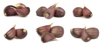 Garlic clove isolated on white background. Isolated garlic. Garlic clove isolated on white background Royalty Free Stock Image