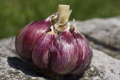 Garlic clove Stock Images