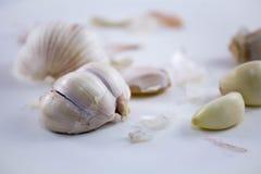 Garlic. Clove on white back ground Royalty Free Stock Photography