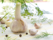Garlic cloves. Close up on fresh whole garlic cloves on kitchen towel stock photography