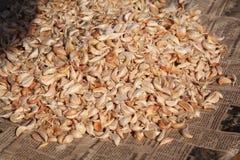 Garlic cloves Stock Photo