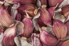Garlic cloves Royalty Free Stock Images