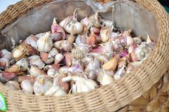Garlic cloves in a basket Royalty Free Stock Images