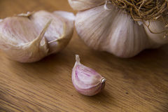 Garlic Cloves and bulb Stock Photography