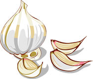 Garlic, Cloves, Clove, Vegetable Stock Images