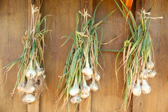 Garlic cloves. Drying on a wall Royalty Free Stock Photos