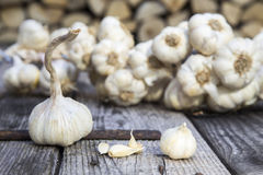 Garlic. Cloves of garlic on the wood background royalty free stock image