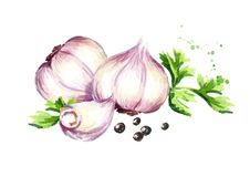 Garlic composition with parsley and black pepper. Watercolor hand drawn illustration, isolated on white background.  Stock Photo