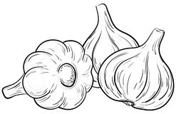 Garlic, contours Stock Images