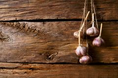 Garlic on a cord. Royalty Free Stock Images