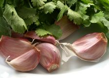 Garlic and coriander Royalty Free Stock Images