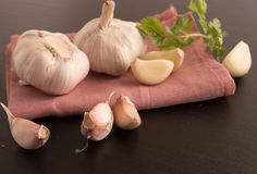 Garlic with coriander on the pink color kitchen cloth Stock Image