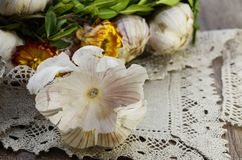 Garlic  with flowers. Garlic decorated with dried  flowers and  green leaf of the plant ,close up Stock Images