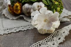 Garlic skin  with flowers and  linen napkin Royalty Free Stock Photos