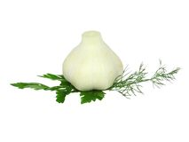 Garlic, decorating of parsley. Isolated Royalty Free Stock Photos