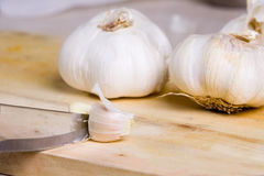 Garlic. For the different preparations of food plates stock image