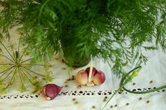 Garlic and dill Royalty Free Stock Image