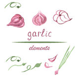 Garlic elements. Watercolor garlic isolated elements on white background for any design. Vector illustration. Hand drawn Royalty Free Stock Photography