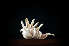 Garlic flower Royalty Free Stock Images