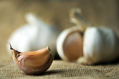 Garlic Royalty Free Stock Photography