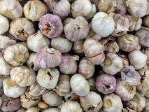 Garlic - Fresh Fruit Vegetabels After Harvest. Fresh Fruits and Vegetables Collection After Harvest in Display Royalty Free Stock Photography