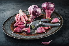 Garlic. Fresh garlic. Red garlic. Garlic press. Violet garlic.Garlic background. garlic bulbs Stock Photos