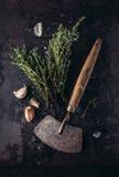 Garlic and Fresh Thyme Stock Image