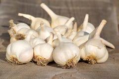 Garlic. Fresh garlic on wooden board Stock Photography