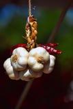 Garlic garland Royalty Free Stock Photo