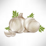 Garlic with garlic cloves Royalty Free Stock Photography