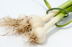 Garlic.  Garlic is not ripened on the stem of the leaf Royalty Free Stock Image