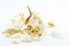 Garlic and garlic peel on a white background Royalty Free Stock Photography
