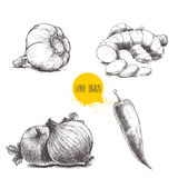 Garlic, ginger root with slices, onions and red hot chili pepper. Hand drawn sketch style set illustration of different spices isolated on white background Stock Photo