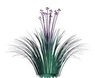 Garlic grass Royalty Free Stock Photo