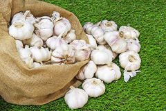 Garlic on green grass. Stock Images
