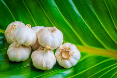 Garlic on green leaf Royalty Free Stock Image