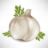 Garlic with green parsley leaves Stock Photo