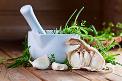 Garlic and  green spices Stock Photography